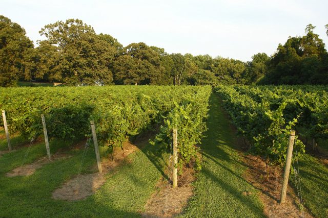 Vineyard Weddings Calvert County, Maryland