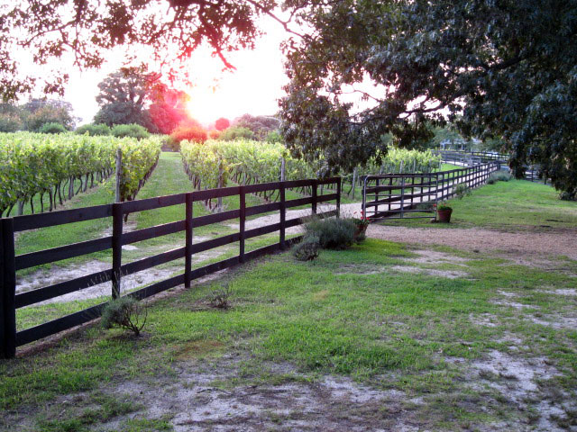 Perigeaux Vineyards Southern Maryland Sunset