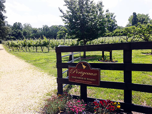 The Perigeaux Vineyards