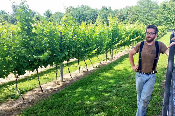 The Vineyards Gallery Photo 3