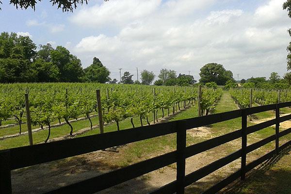 The Vineyards Gallery Photo 6