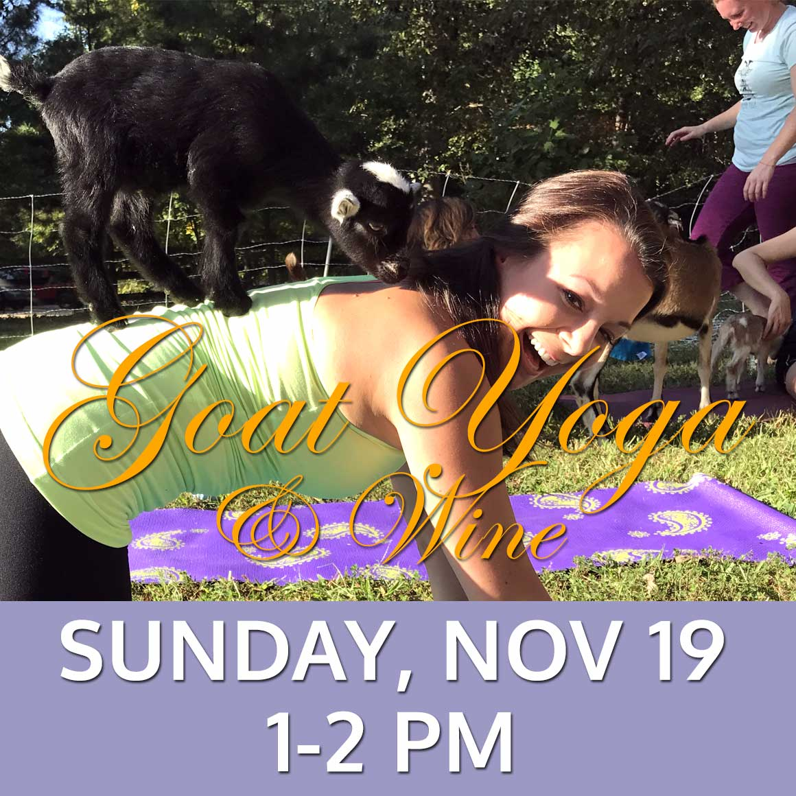Goat Yoga & Wine - November 19, 2017